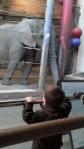 luke zoo