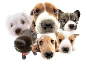 doggs