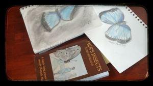 morpho buttefly