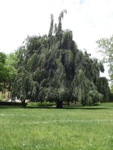 tree study 007