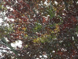 tree study 012