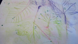 Leaf rubbings, and counting the points on each leaf