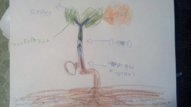 Photosynthesis drawing/labeling