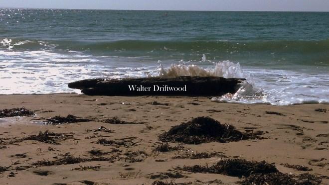 walter driftwood