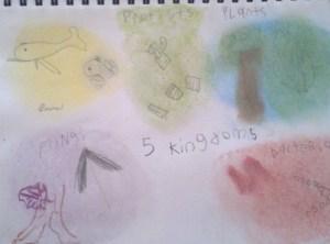 5 kingdoms