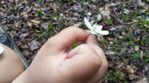 Luke wondered if this was a vanilla bean flower?!