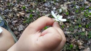 Luke wondered if this was a vanilla bean flower?!